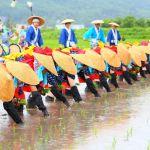 Festival Menanam Padi Di Jepang Yang Disebut Otaue