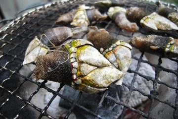 Hidangan Tangan Kura-Kura Di Jepang ! Berani Mencoba??