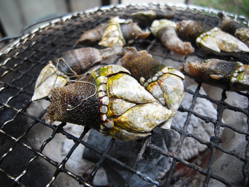Hidangan Tangan Kura-Kura Jepang Ini Enak Gak Ya ? Kamu Berani Coba ?