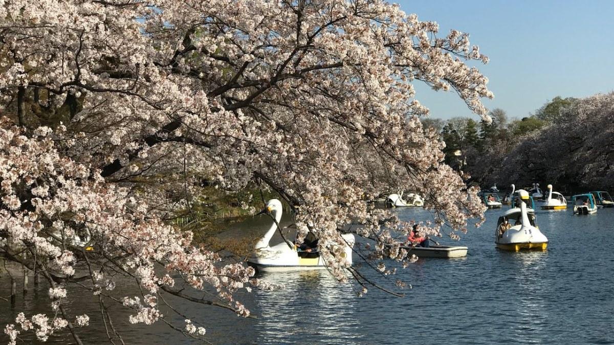 Berwisata Di Kichijoji Tokyo ? Lakukan 4 Hal Ini !