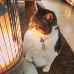 Tingkah Laku Lucu Seekor Kucing Di Jepang Yang Jatuh Cinta Dengan Mesin Penghangat Ruangan !