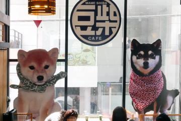 Pecinta Hewan Peliharaan Anjing Wajib Kunjungi Ketiga Kafe Shiba Inu Berikut Ini !
