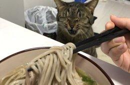 Pergantian Era Membuat Sedih Seekor Kucing Di Jepang