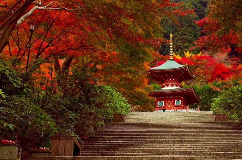 5 Lokasi Terbaik Untuk Menikmati Indahnya Musim Gugur Di Prefektur Osaka