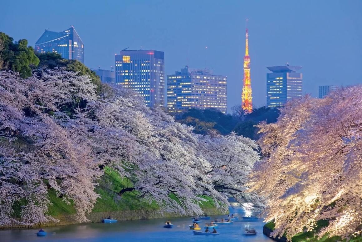 5 Festival Bunga Sakura Terbaik Yang Ada Di Kota Tokyo