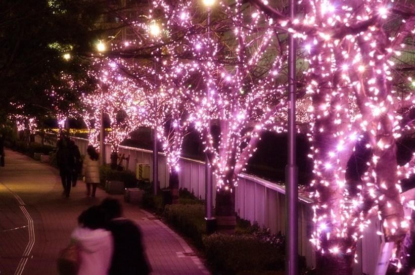 Nikmati Keindahan Bunga Sakura Musim Dingin Disepanjang Sungai Meguro Tokyo