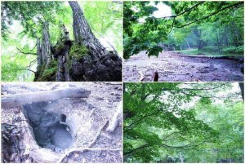 Menikmati Wisata Alam Eksotis Dalam Hutan Mistis Hikari no Mori