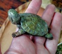 Mini Bronze Turtle Sculpture