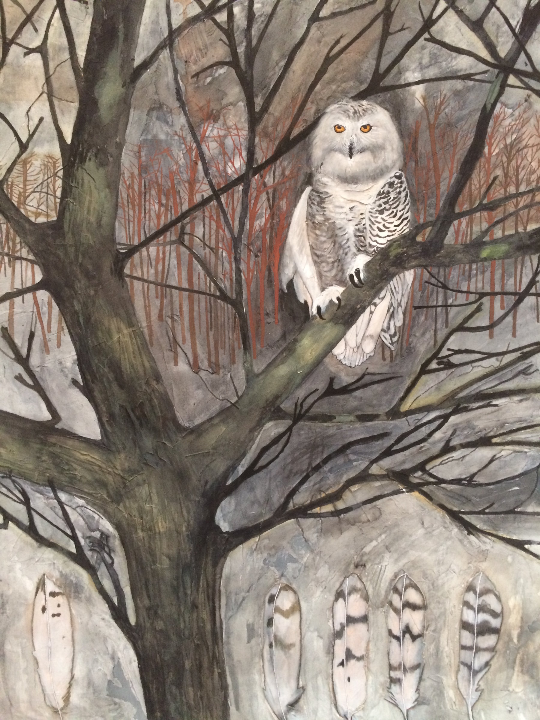 Snowy Owl In The Maine Woods By Diana Arcadipone