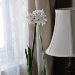 Spring Homemaking