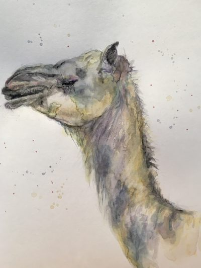 Watercolour painting practice of a camel