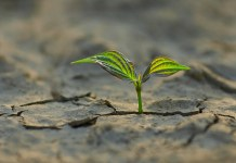 Umut, Tüm Canlıların Mücadele Kaynağı
