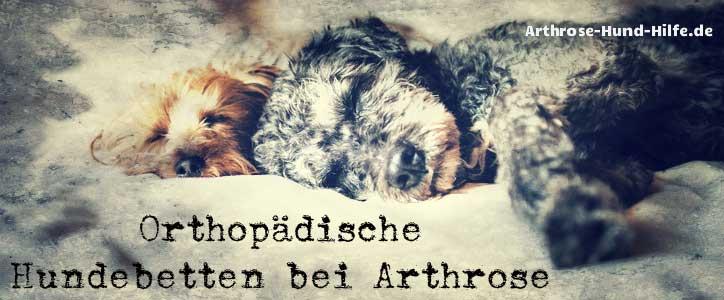 Orthopädische Hundebetten bei Arthrose