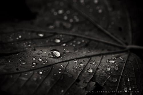 dark dew sephia
