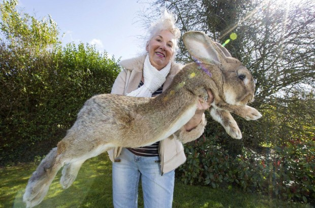 biggest rabbit