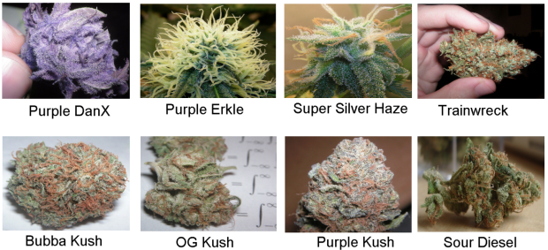 Medical Marijuana Sample Photos 1.3 weed strains