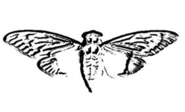 Cicada_3301_logo (1)
