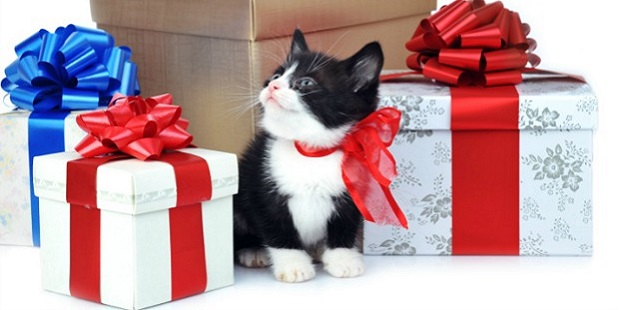 Amazing Gifts For Pets