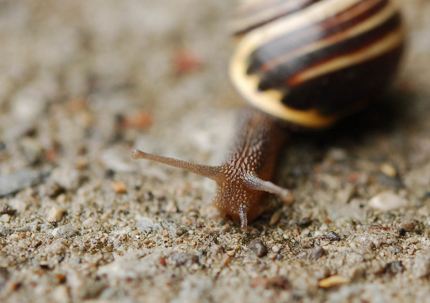 stoner: close up picture of a snail