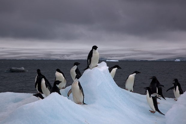Photo of penguins on Adelie iceberg in Antarctica