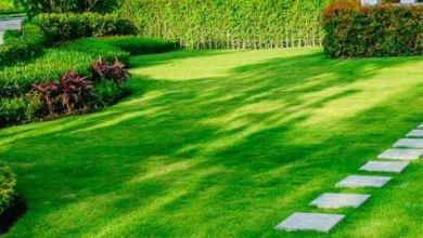 Photo of Landscape maintenance solutions