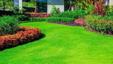 Photo of Exceptional Suggestions | Lawn Maintenance
