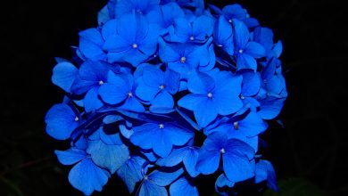 Photo of 6 Artistic Blue Flowers Perfect for your Garden