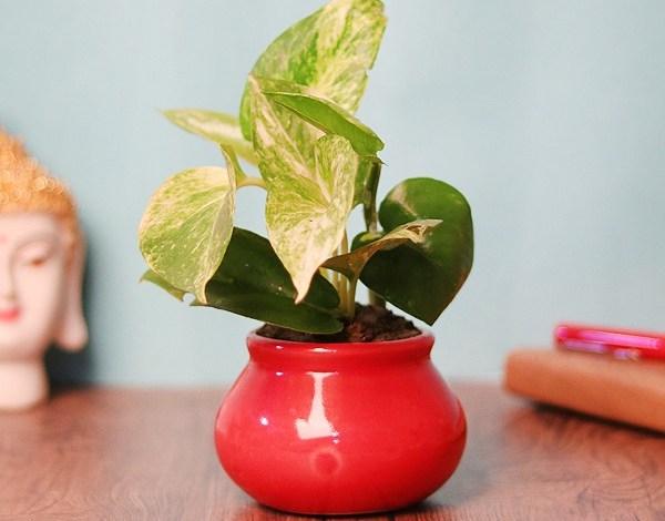 send plants to mumbai