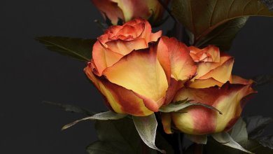 Photo of Top 5 Beautiful And Elegant Flowers For The Men