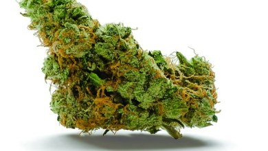 Photo of The Ultimate Guide To Purchase Cannabis Online