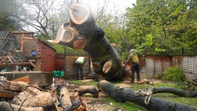 Photo of Which Tree Surgeons In Chelmsford Actually Hired By You?