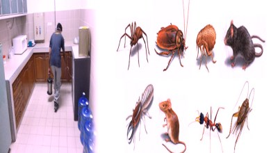 Photo of Pest control services in airoli are beneficial to people