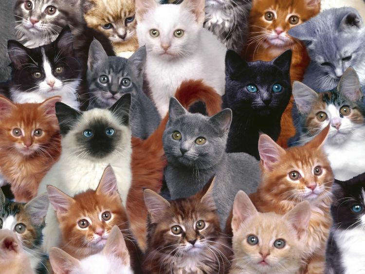 The best Kitty Cat Desktop Wallpaper you will ever find