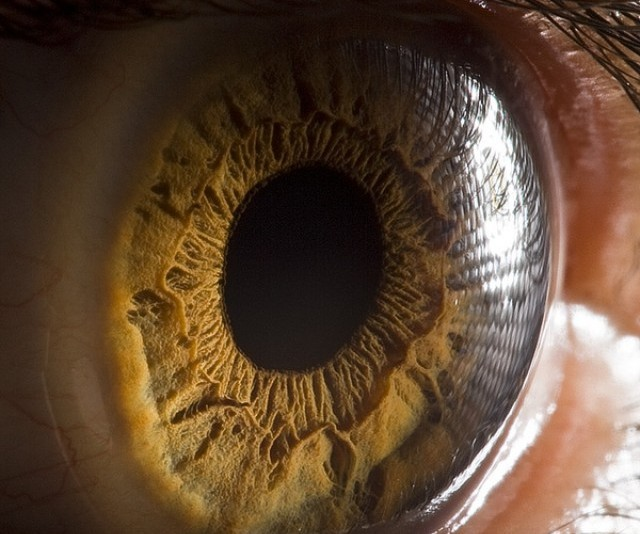 Close-up of eyeball