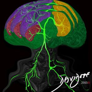 aorta, abdominal aorta, kidney, spleen, liver, branching pattern, tree, arborising pattern, MRI, radiology, Art in Anatomy, Ashley Davidoff MD