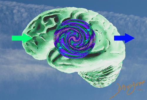 brain-0028-catalogue-signed