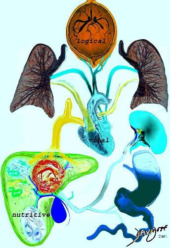 heart, brain, lungs, spleen, liver, gallbladder, stomach, Hippocrates, humors, yellow bile, black bile, Hippocrates, medical history