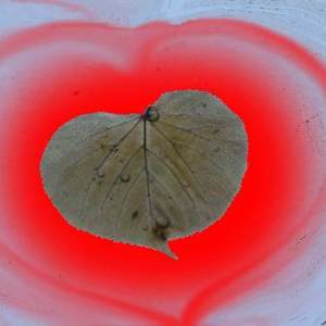heart, heart shape, Linden tree, heartbreak, leaf, leaves, heart shape, Valentine's day, romance, love, lost love