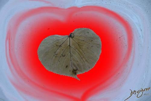 heart0044-catalogue-signed-500-72dpi