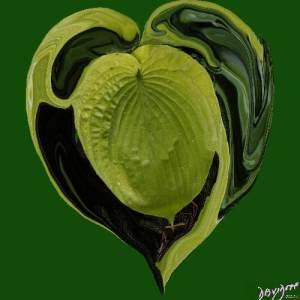 heart, heart shape, yin-yang, hosta, leaf, heart shape, Valentine's day, romance, love,