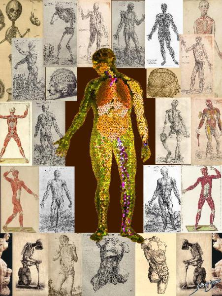 the common vein, units to unity, history, body, anatomy, cells, parts