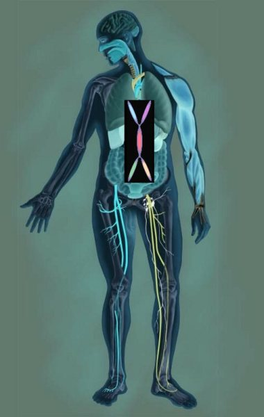 the common vein, units to unity, body, anatomy, structure, function, disease, diagnosis, treatment