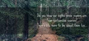woodland path through trees