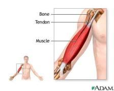52e662_tendon