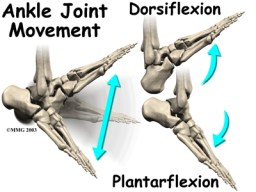 ankle_impingement_anat02