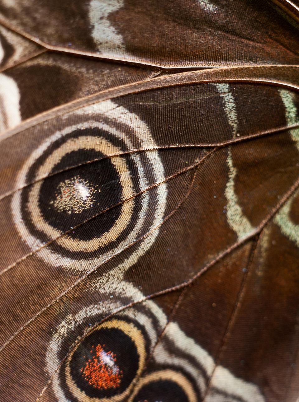 butterfly wing 8