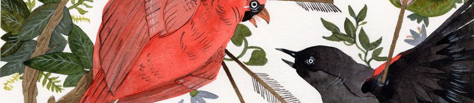 Illustrations by Jensine Eckwall.