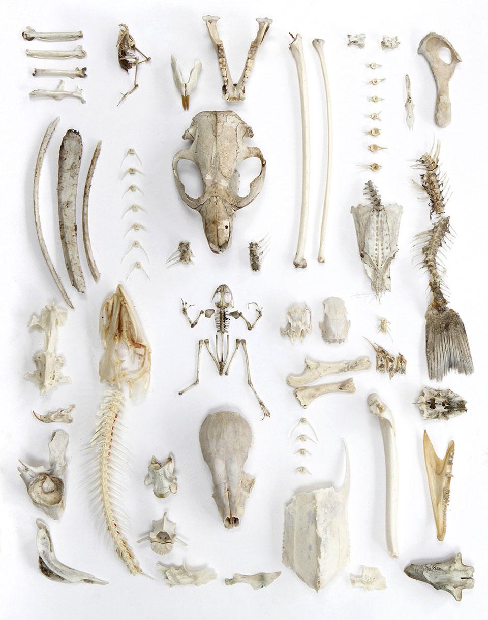 Joes-bone-collection1