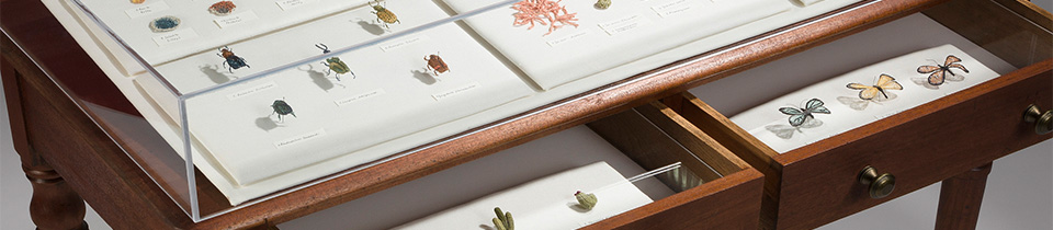 Cabinet of Curiosities by Eleanor Rose.