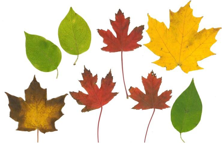 Leaf Print 2